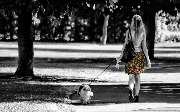 multa paseo perro